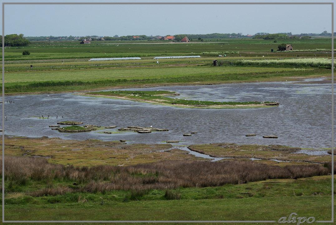 20130606_1233vogelkolonie_DePetten_Texel