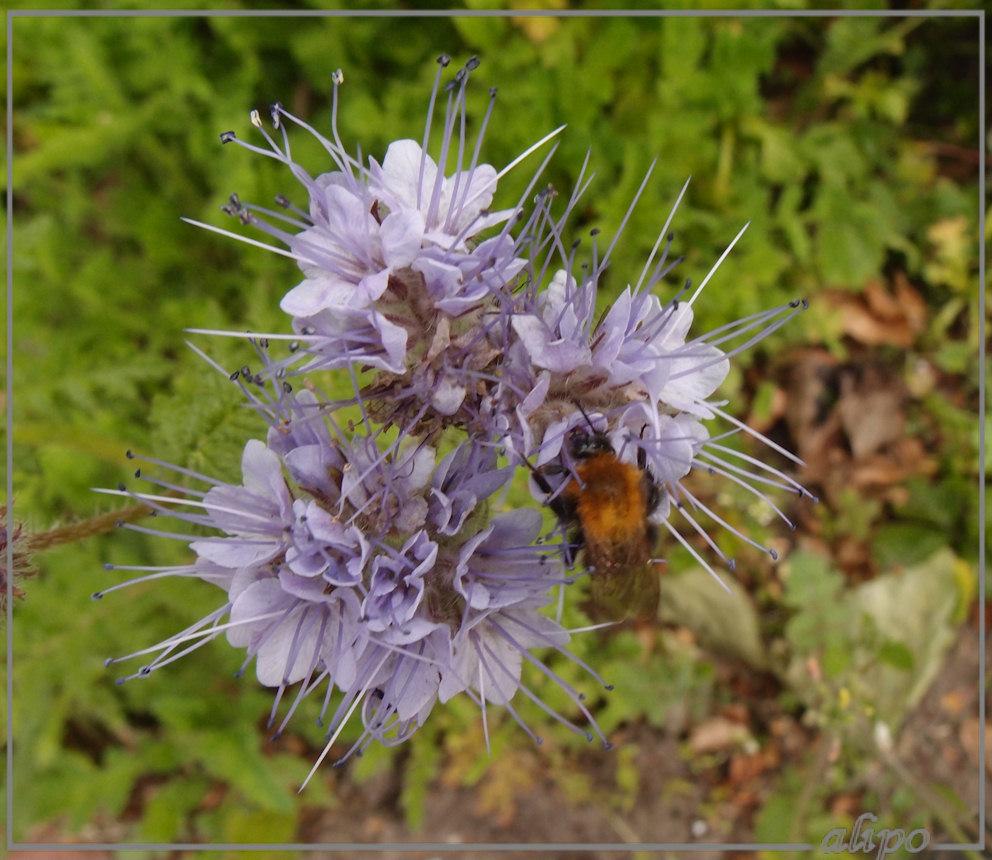 Bijenvoer Olympus XZ1