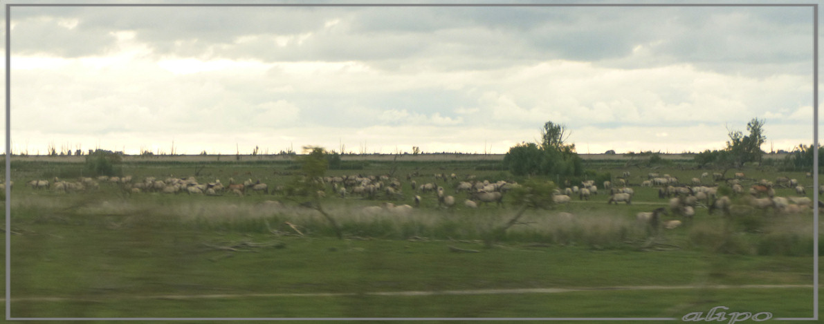 20140624_2035Oostvaardersplassen_uit_trein (8)  Lumix