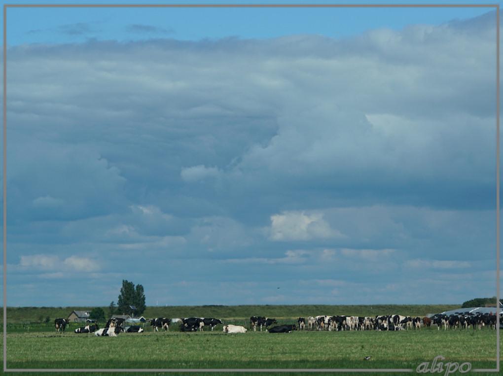 20150616_1619landschap_NoordEnkhuizen6