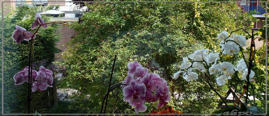 Orchideeën moe Olympus XZ1