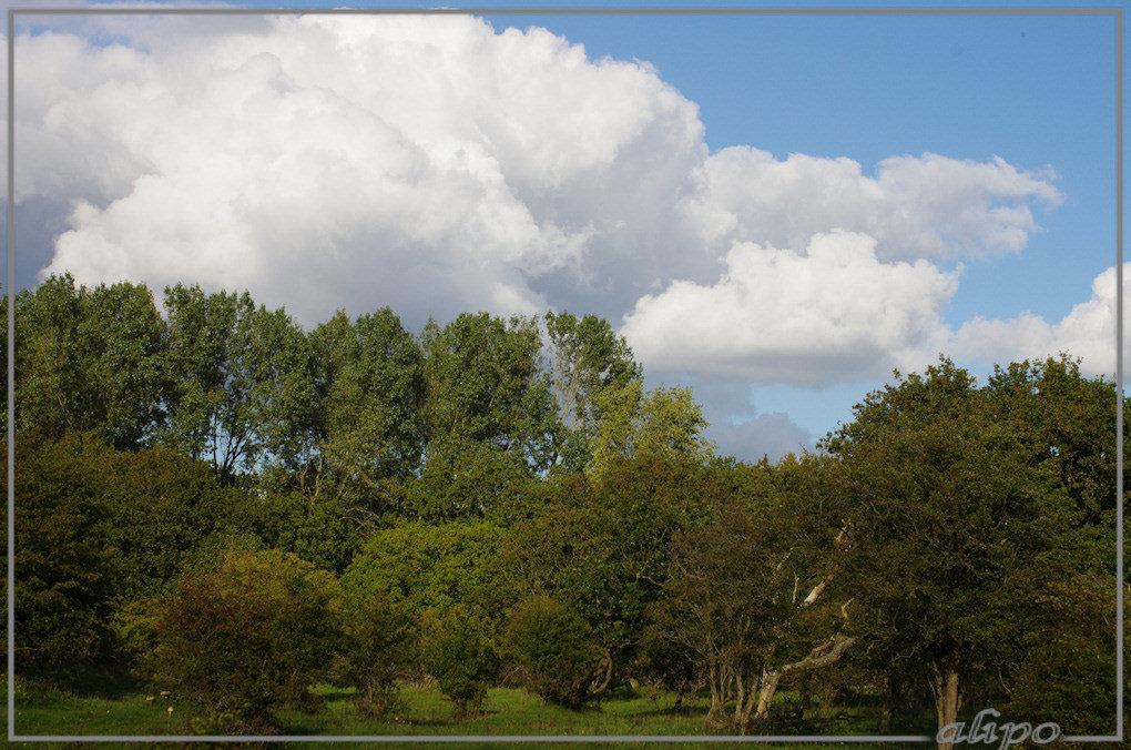 20150926_1633bomen_wolken_Herenduinen2