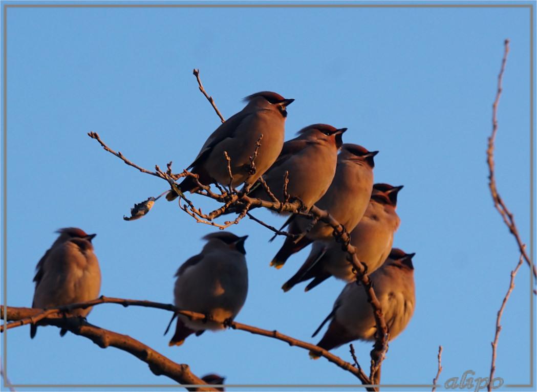 20161105_1647pestvogels_heerenduinweg-13