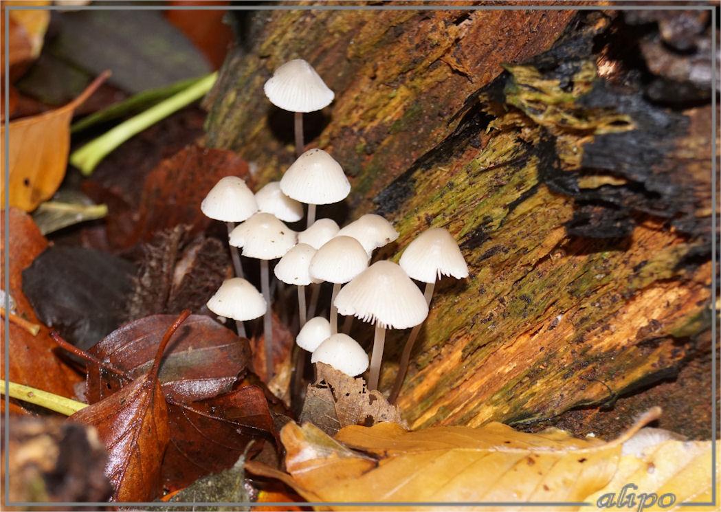 20161116_1501paddenstoelen_onbekend_velserbeek