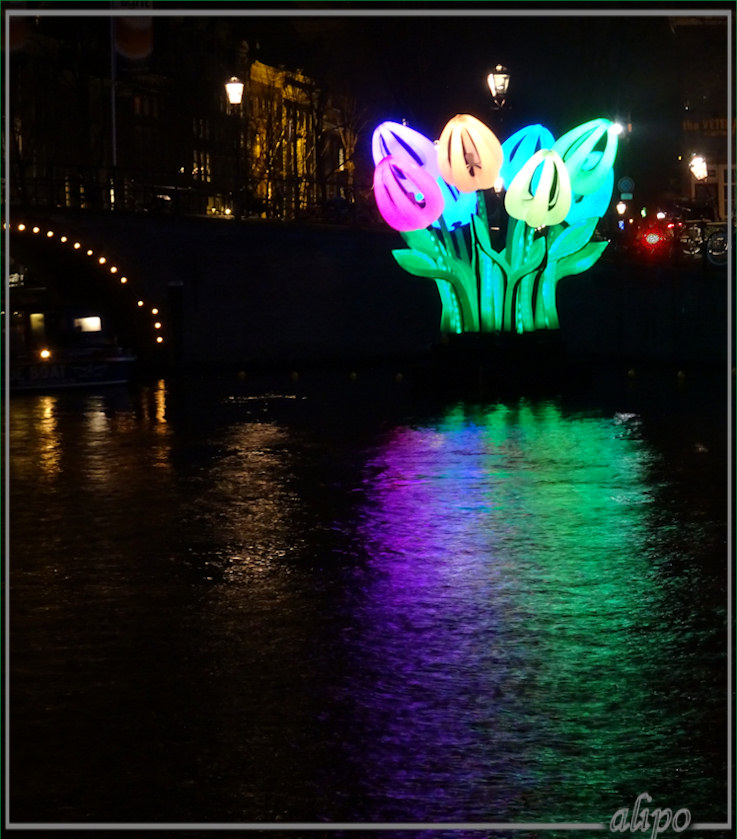 20161221_1932amsterdam_light_tulpen-2