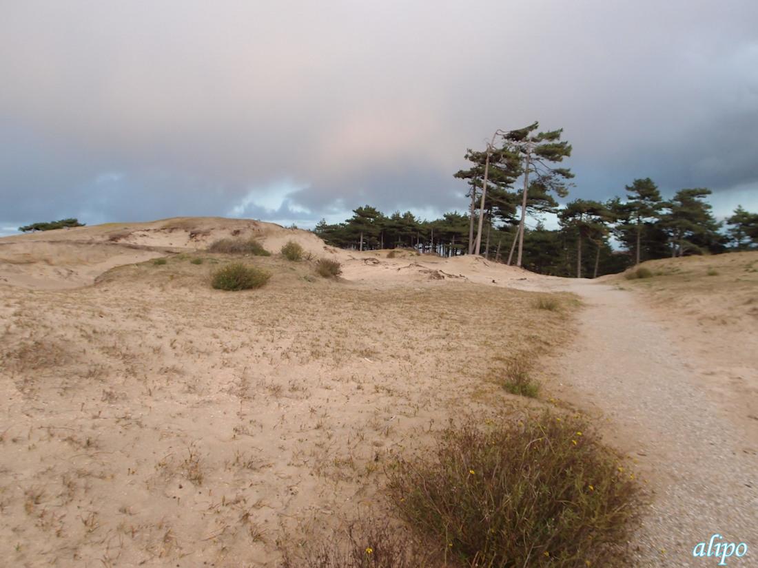 Duinen Vogelmeer