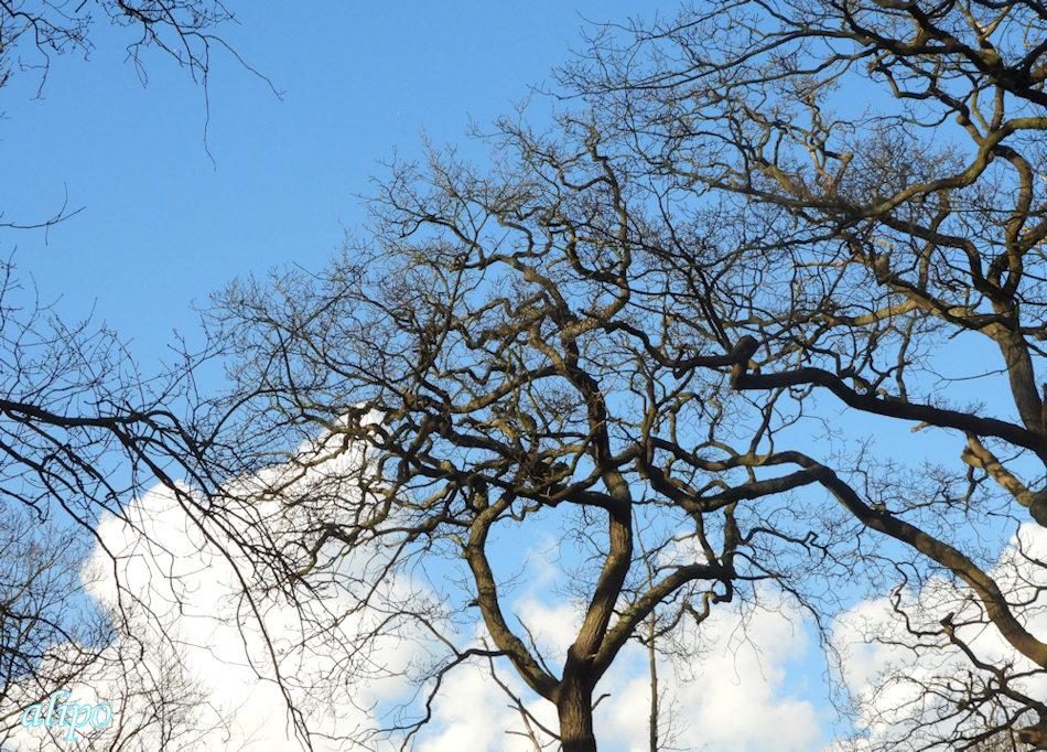 Bomen lucht